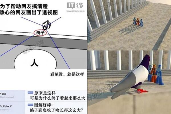 鸽子为什么那么大到底是什么梗?鸽子为什么这么大的出处及演变