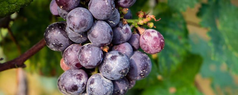 抖音新疆数葡萄是什么意思?什么梗?新疆数葡萄的出处