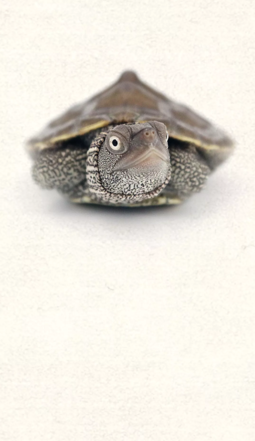 抖音乌龟主题手机壁纸 高清无水印多图