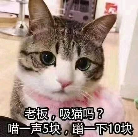 吸猫是什么意思?是什么梗?它的出处