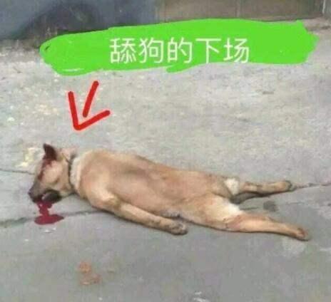 舔狗是什么意思?如何看待添狗?添狗表情包大全