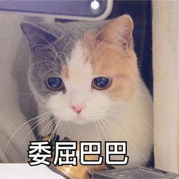 做我的猫是什么梗?男朋友说想做我的猫什么意思