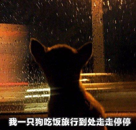 单身狗是什么意思?单身狗的快乐有哪些?单身狗文案句子