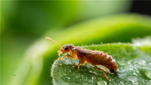 水蚁和白蚁的区别?怎么样赶走大水蚁?