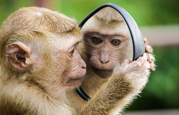 猴脑营养价值高吗?油泼猴脑是什么?吃一顿猴脑大约多少钱