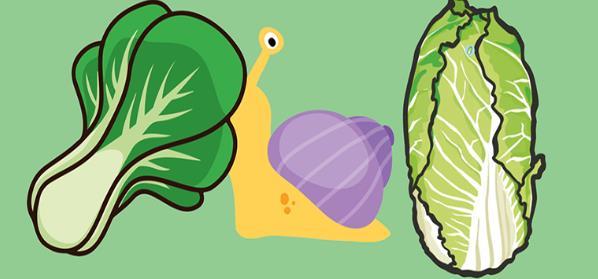 蜗牛喜欢吃什么?蜗牛放在家里应该怎么养?