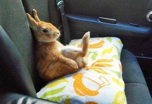 为什么不能用脚踩枕头,传说坐在枕头上会有什么后果?