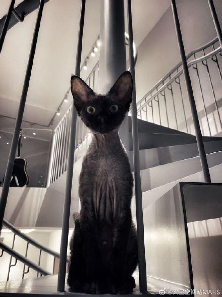 在中国黑猫辟邪还是招邪?家里可以养黑猫吗好不好?