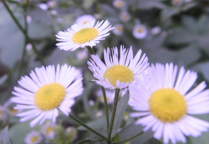春天晒太阳享受的唯美句子,朋友圈晒太阳的说说