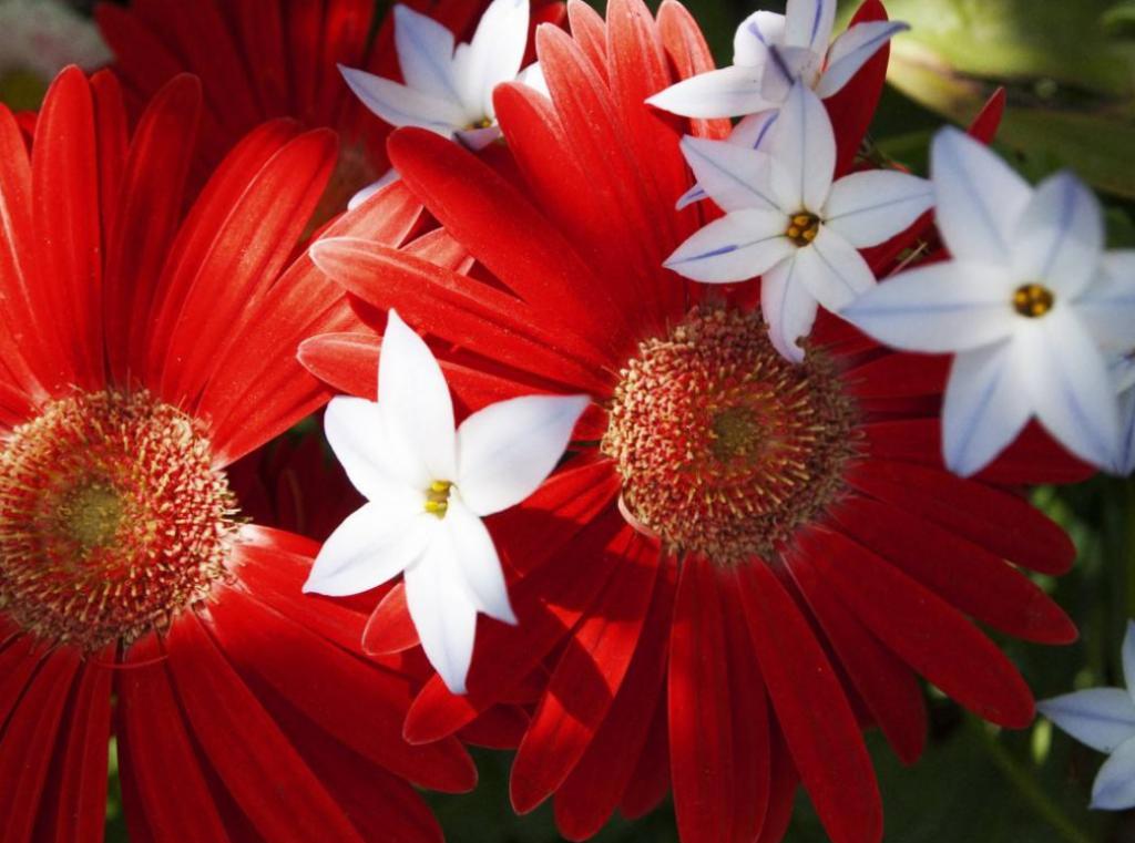 描述赏花时的美好心情短语,唯美赏花说说心情句子