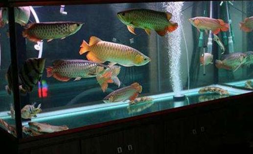 冬天养鱼水温多少合适?冬天养鱼需注意什么?