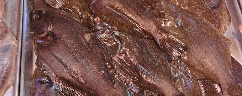 牙片鱼多少钱一斤,牙片鱼怎么看新不新鲜