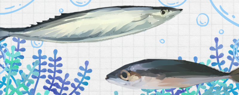 秋刀鱼和青占鱼是同一种鱼吗,有什么区别