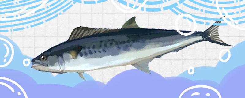 马鲛鱼有毒性吗,有寄生虫吗