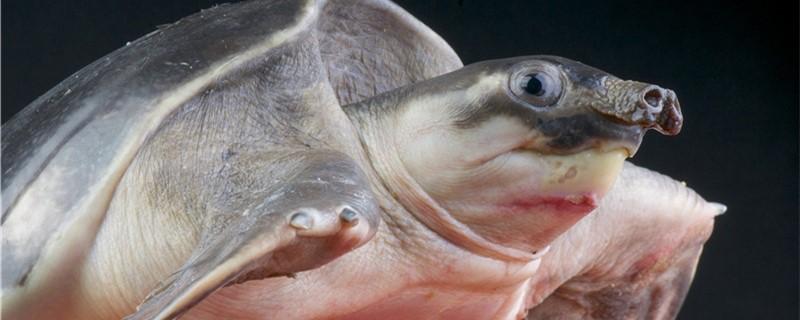乌龟生活在哪里,家养乌龟对环境有什么要求