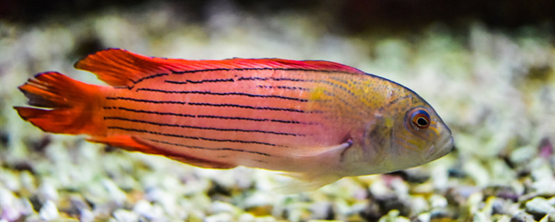 鱼得了水霉病用什么药,水霉病怎么治疗