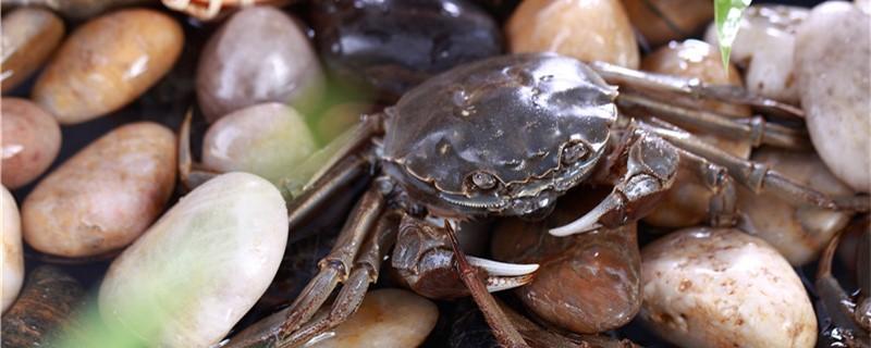 螃蟹不动了是不是死了,螃蟹快死前的征兆有哪些