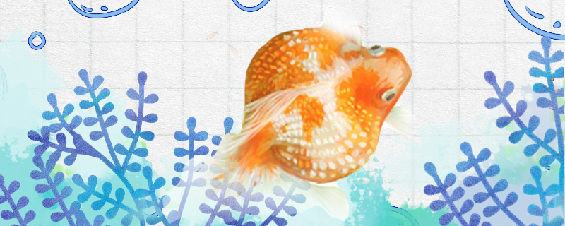 金鱼用什么颜色的灯光,一天开几小时灯合适