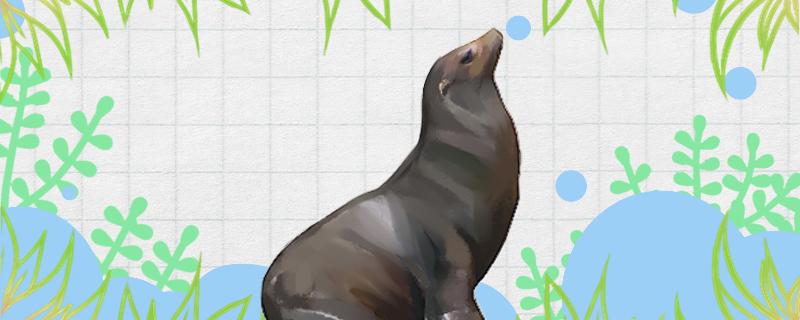 海狮为什么叫海狮,和狮子有关系吗