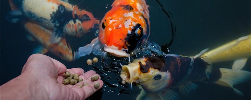 鱼身上挂水泡什么情况,水质不好怎么办