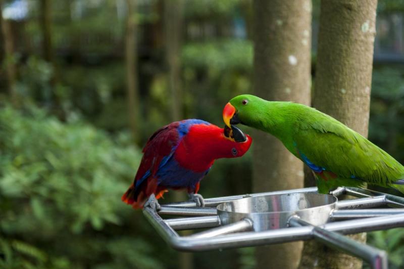 两只鹦鹉用嘴互咬是什么意思