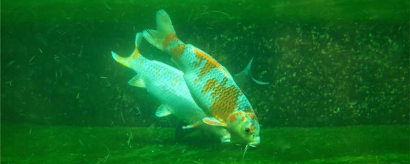 鱼缸里水浑浊怎么处理,鱼缸水为什么浑浊