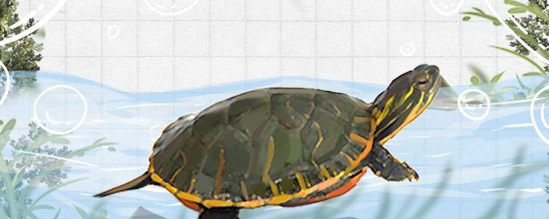 乌龟夏天可以晒太阳吗,乌龟晒太阳有哪些好处