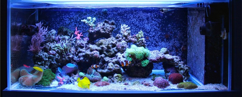 新手如何布置鱼缸,鱼缸造景需要什么
