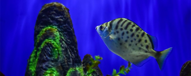 小热带鱼几天喂一次,热带鱼怎么喂食