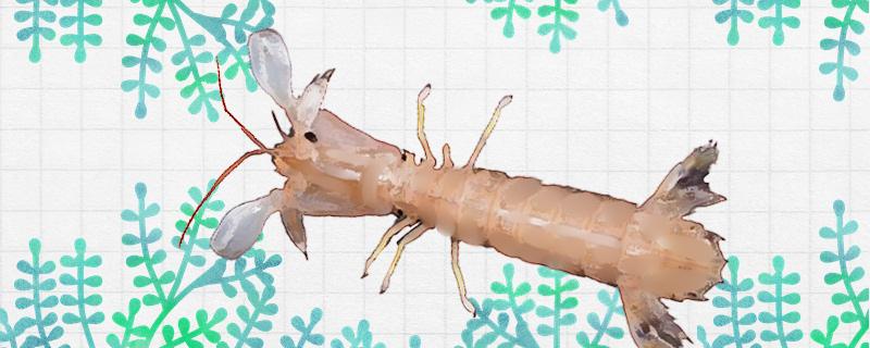 皮皮虾能养殖吗,怎么养殖