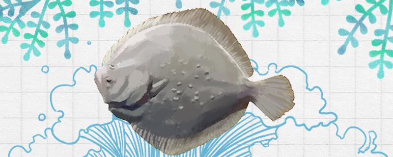 多宝鱼和比目鱼一样吗,有什么区别
