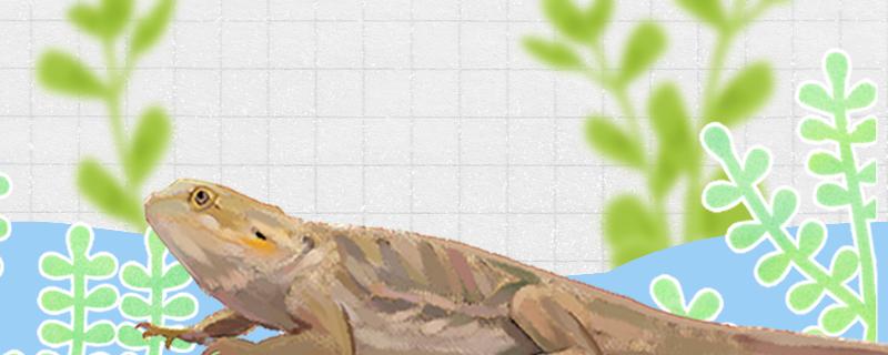蜥蜴为什么会变色,什么时候变色