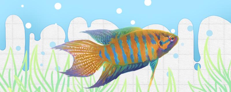 如何判断鱼的年龄,常见观赏鱼的寿命是多少