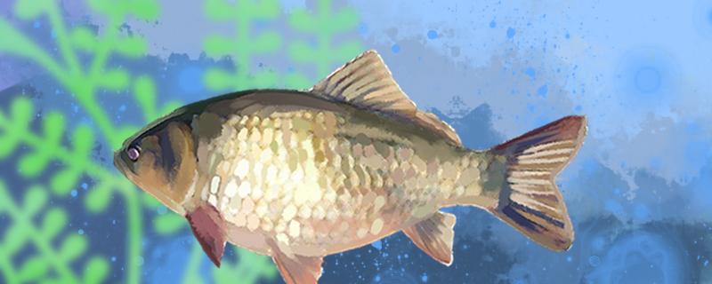 观赏鱼多久加一次盐,给鱼加盐有什么用