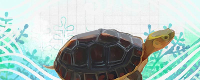 金头龟好养吗,怎么养