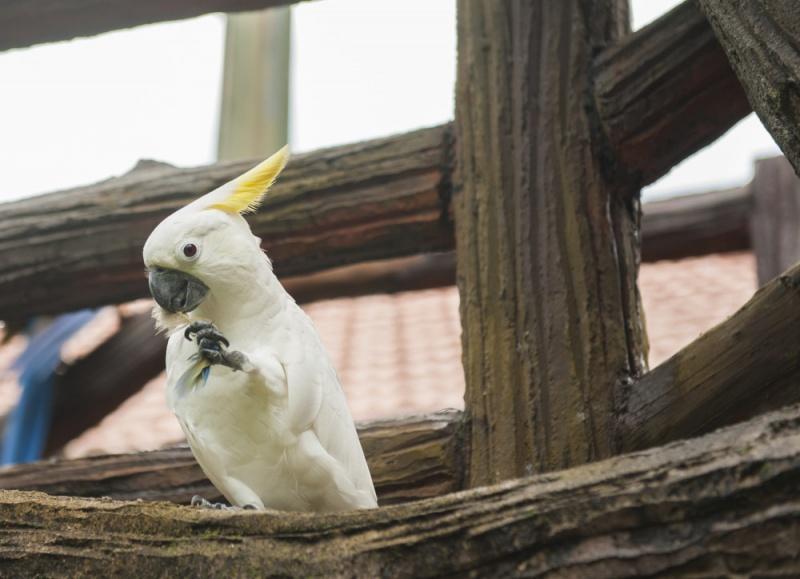 鹦鹉怕人不给摸怎么办