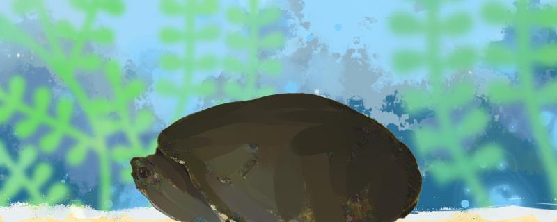 澳北盔甲龟好养吗,怎么养