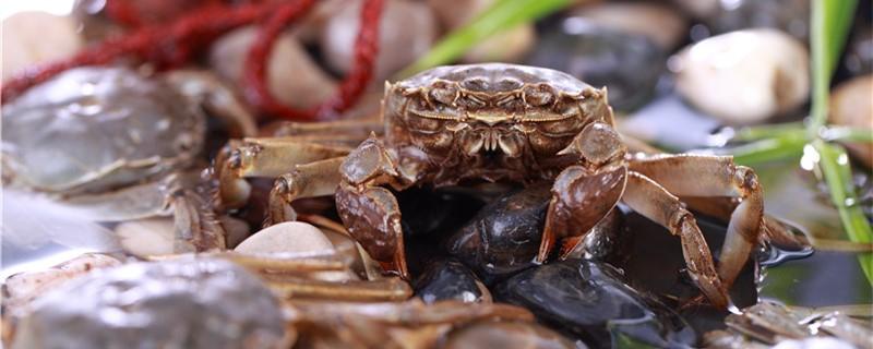 螃蟹有嘴巴吗,会叫吗