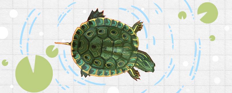 乌龟盯着主人看表示什么,乌龟怎样才算认可主人