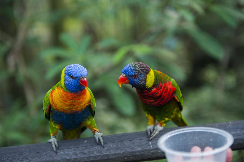 鹦鹉是群居动物吗