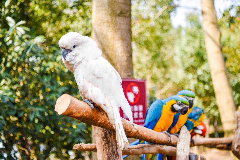为什么鹦鹉总是背对着人