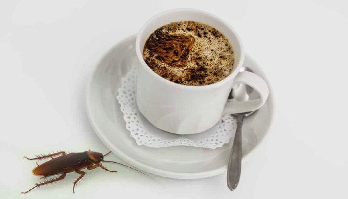 英国医生称多数咖啡粉中含有蟑螂,喝咖啡的好处!