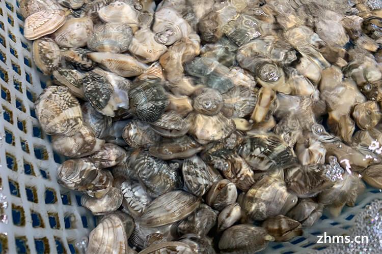 清明节吃什么海鲜