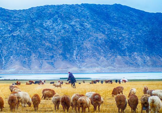 可可托海的牧羊人歌词是什么?原唱是谁?