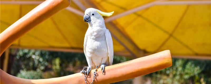 捡到只鹦鹉怎么找到他主人