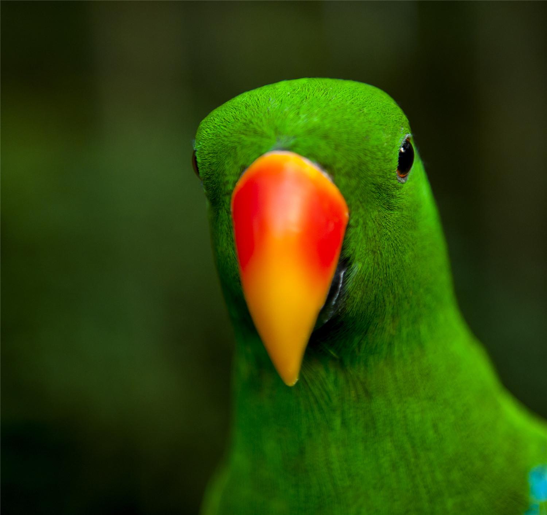 鹦鹉晚上能看见东西吗