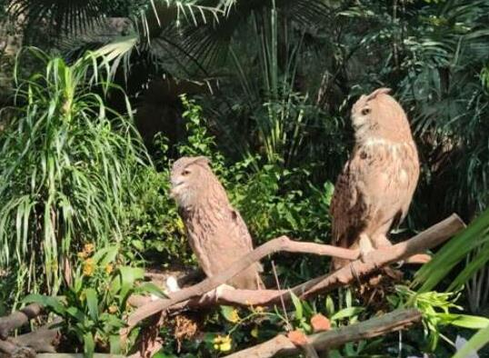 中国最受欢迎的十大动物园,北京动物园、广州长隆野生动物世界很有名