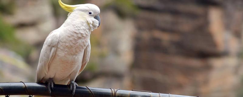 养鹦鹉能开空调吗