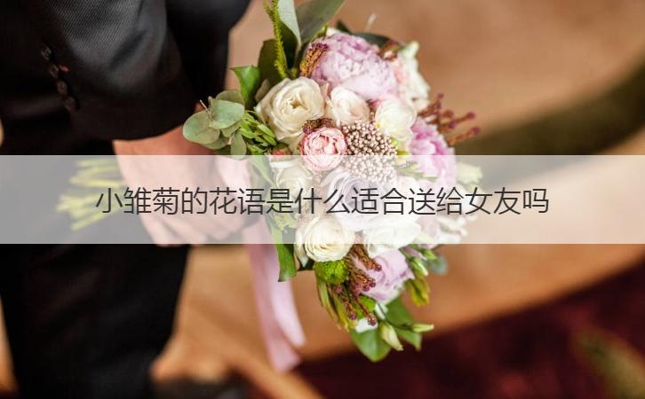 小雏菊的花语是什么适合送给女友吗
