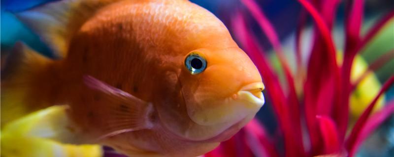 120长40宽的鱼缸能养什么鱼,养什么鱼比较合适